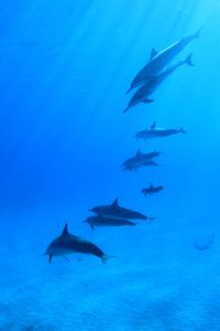 dolphins-788178_1920