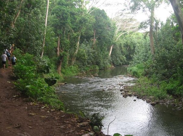 wailua-river-and-secret-falls-guided-kayak-and-hiking-tour-in-kapaa-265418